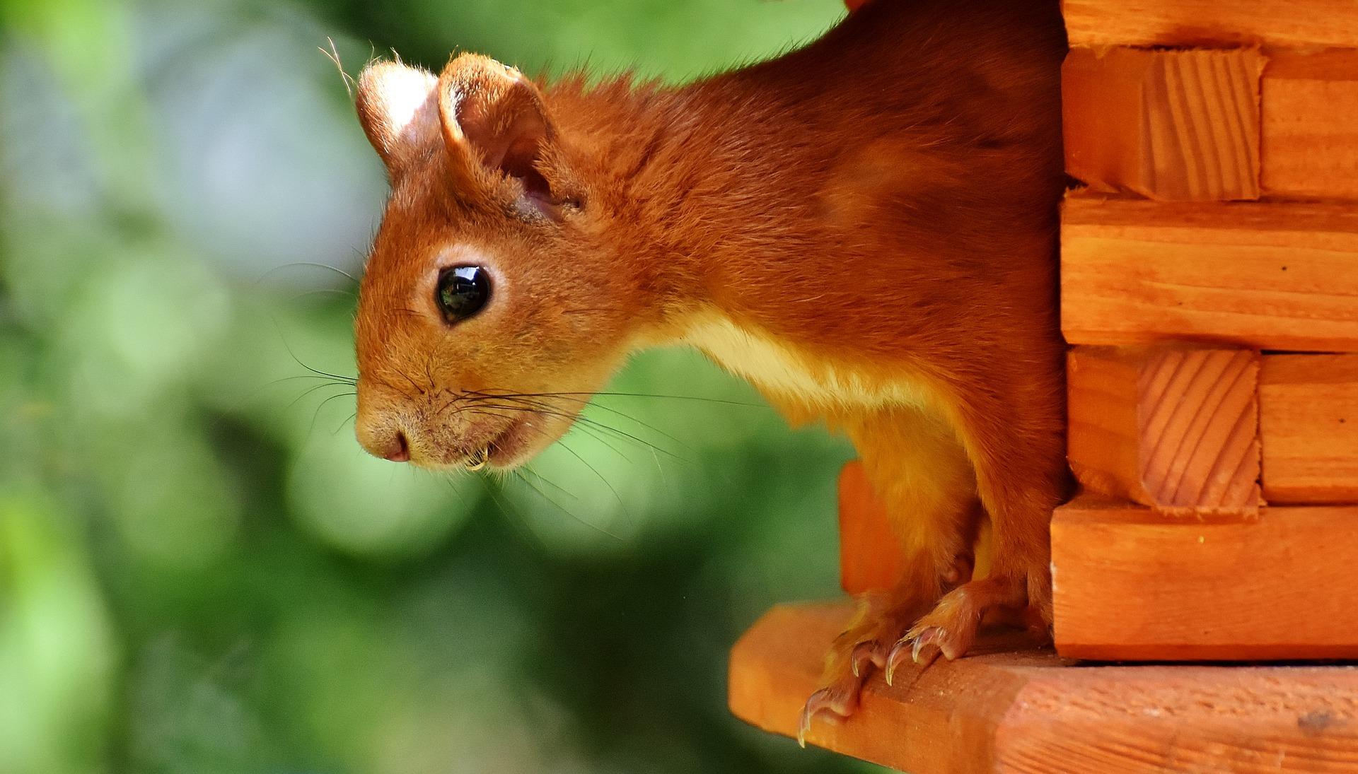 In einigen Zoohandlungen kann man Eichhörnchen kaufen auf blog-kade.de