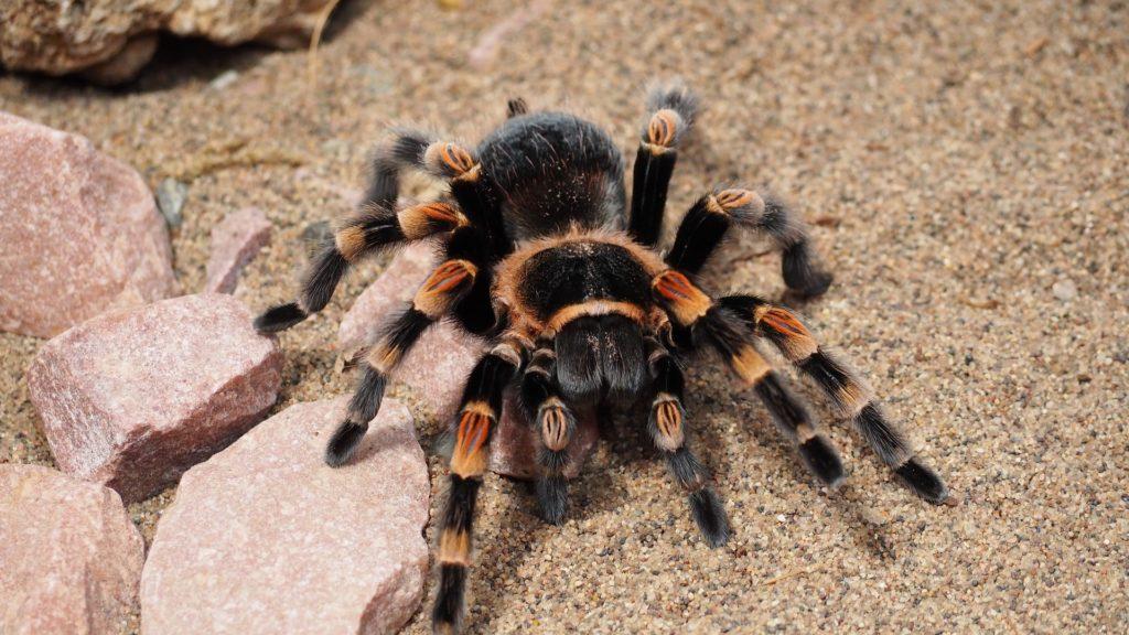 Exotische Haustiere halten Einzug in deutsche Häuser auf blog-kade.de