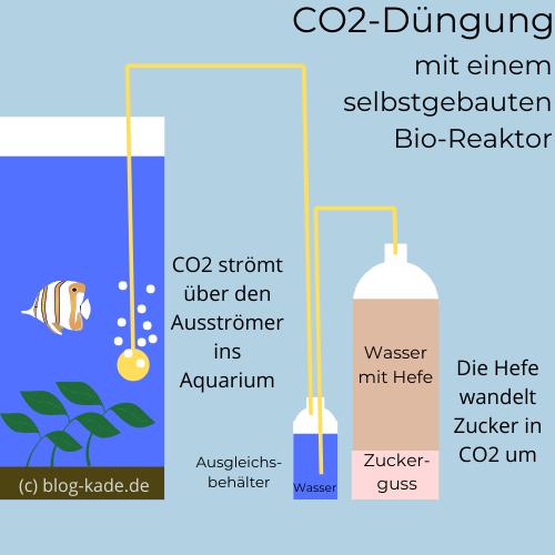Aquarium Pflanzen düngen ja oder nein? auf blog-kade.de